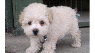Buddy es un simpático cachorro que ´permanece retenido en el aeropuerto de El Prat.