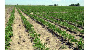 La actual ley de semillas tiene más de 40 años. (Foto: Angel Amaya)