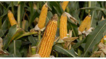 el 46 por ciento de las exportaciones son granos, harinas, aceites y otros subproductos