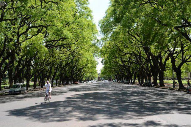 Los árboles son el mejor aliado para mitigar los efectos del cambio climático.