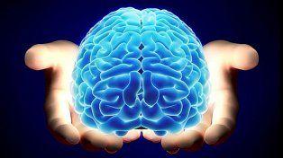 Buceando en el cerebro