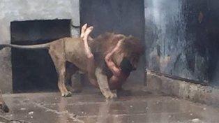 Sacrifican a dos leones de un zoológico para frenar el intento de suicidio de un joven