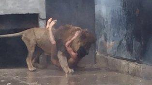 Espeluznante. Un macho se abalanzó sobre el joven y le causó heridas.