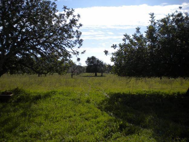 Terrenos. Son dos manzanas cedidas por la provincia al Municipio.