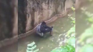 El gorila junto al pequeño en la fosa de los primates del zoológico de Cincinatti.