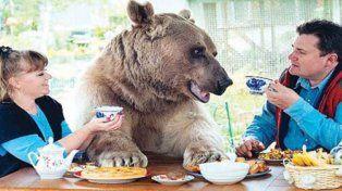 La increíble historia del oso adoptado que comparte la mesa y mira TV en el sofá