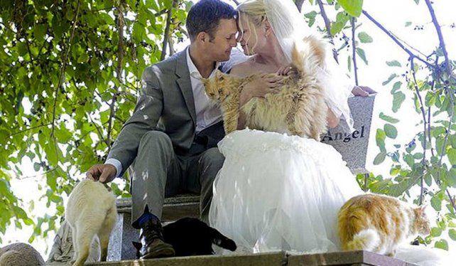 Se casaron rodeados de 1000 gatos