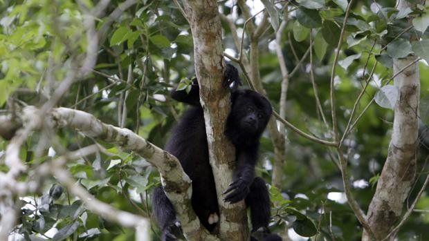 Un mono causó un corte de energía total en toda Kenia.
