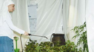 Las monjas de la marihuana que cultivan cannabis y lo reparten al mundo por correo