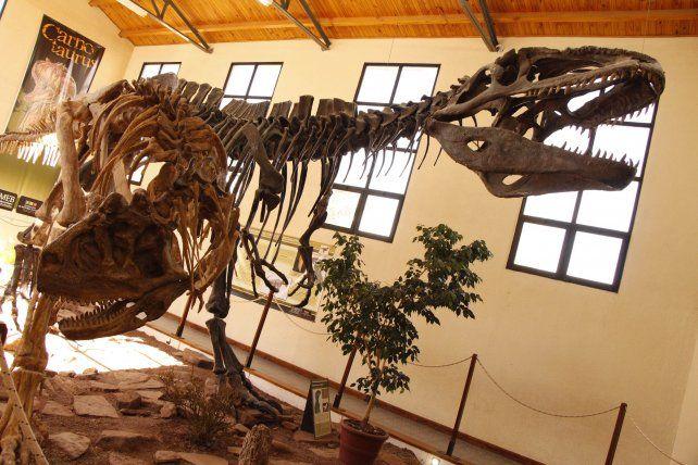 Atractivo. El museo Ernesto Bachman muestra réplicas del Carnotaurus y del Giganotosaurus Carolinii