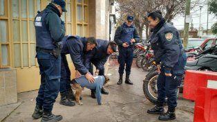 El perro policía se hizo famoso con la publicación de los efectivos.