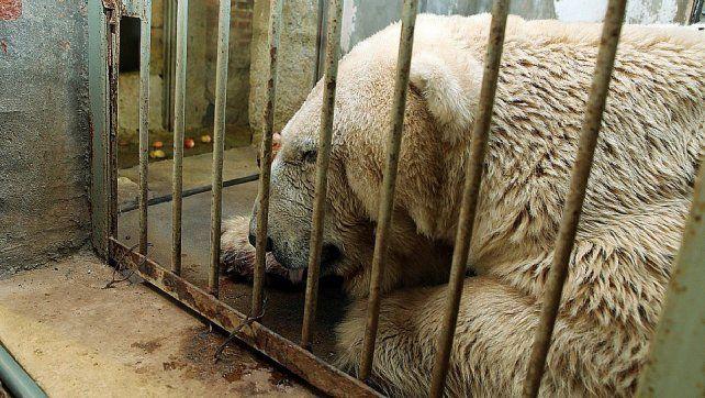 Símbolo. El animal se muestra renuente a recibir medicación y a comer.