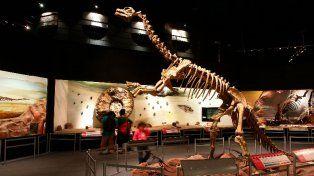 Imponente. El museo atesora una colección paleontológica de 25.722 piezas.