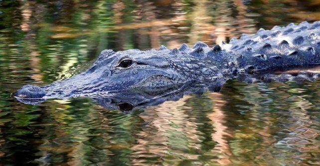 Encontraron muerto al nene de dos años arrastrado por un caimán en un resort de Disney