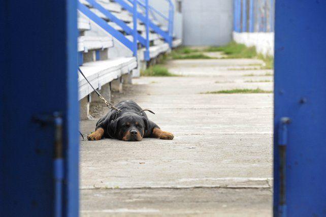 Los vecinos no quieren al perro en el barrio. (foto de archivo)