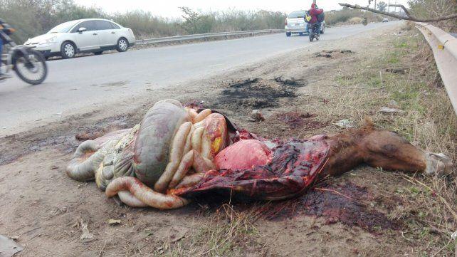 Un jinete y dos niños que iban a caballo al Monumento fueron embestidos por un auto y están graves