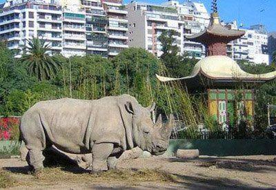 chau zoo. El zoo del barrio de Palermo será convertido en un ecoparque.