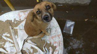 La solución no puede ser siempre sacarle el perro al dueño