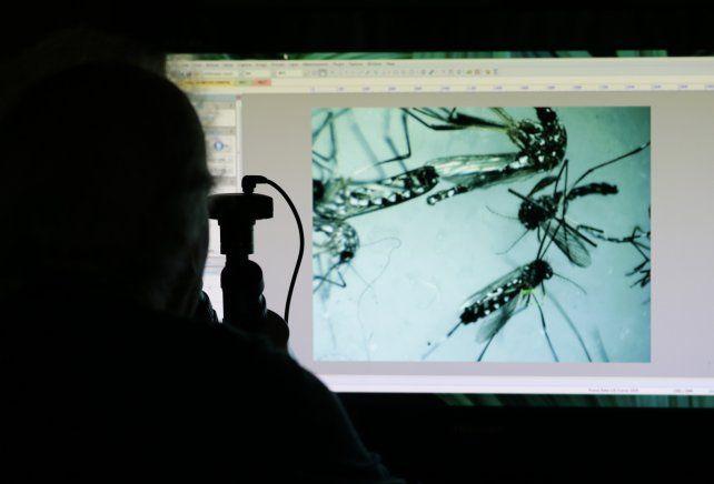 Confirman en Estados Unidos el primer caso de microcefalia por contagio del virus zika