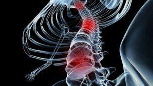 Descubren mecanismos que permitirían curar lesiones en la médula