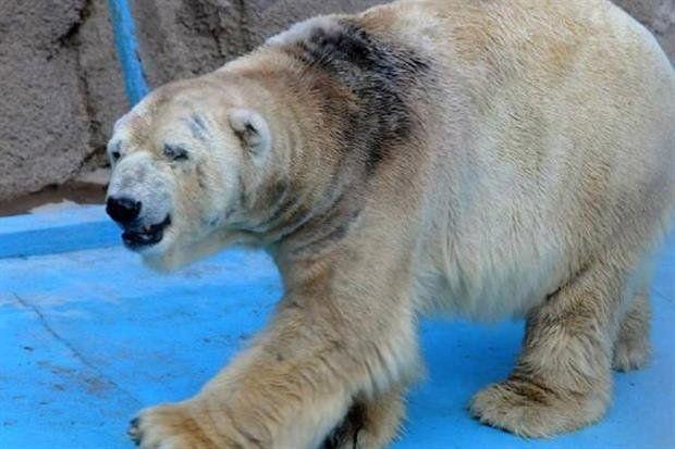 El oso Arturo murió en Mendoza
