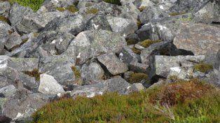 Una imagen se volvió viral: ¿dónde está el ave entre las rocas?