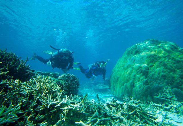 Impresionante. La Gran Barrera de Coral es uno de los mejores lugares del mundo para el buceo y el snorkel.