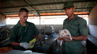 Soldados y criadores. Militares venezolanos trabajan en un criadero de cerdos en una base de Maracay