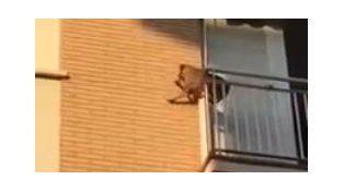 El perro salta al vacío tras soportar varias horas de calor y sin agua.