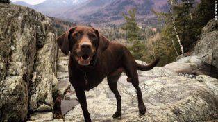 Le diagnostican cáncer terminal a su perra y la lleva de viaje para pasar tiempo juntos