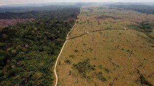 Uso excesivo. Desmonte de la selva brasileña para sembrar soja.