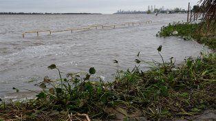 El Conicet demostró la existencia de un herbicida probablemente cancerígeno en el río Paraná