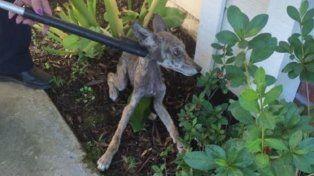 Pensó que estaba rescatando a un perrito y en realidad estaba poniendo su vida en peligro