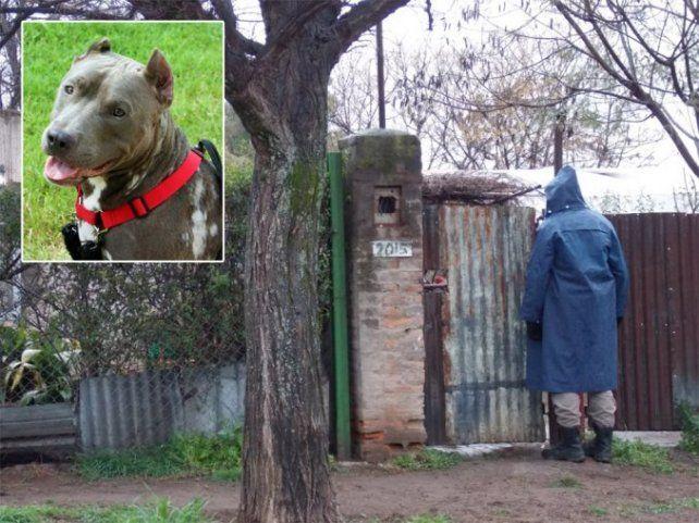 Una mujer murió tras ser atacada en su vivienda por su perra pitbull