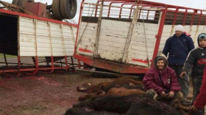 Los animales quedaron tendidos en la banquina.