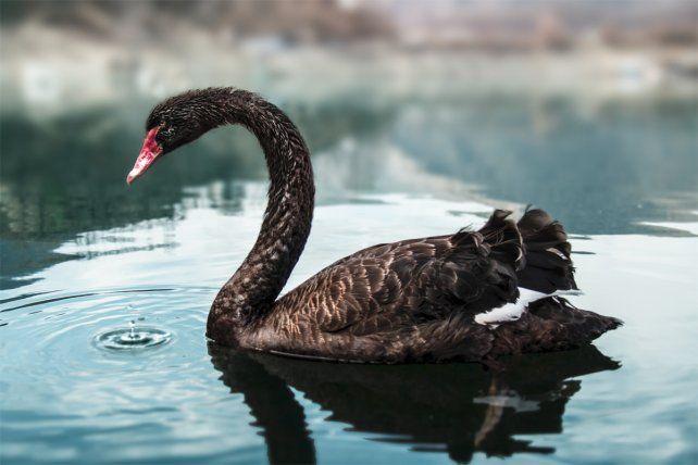 La teoría del cisne negro