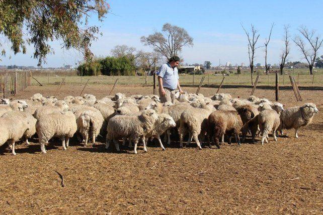 Incentivo. Productores ovinos recibieron ejemplares.