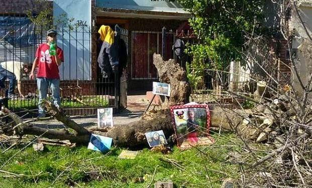 Una nena de dos años murió aplastada por la rama de un añoso árbol