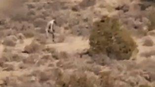 La criatura fue grabada durante algunos segundos en un camino desértico en Portugal.