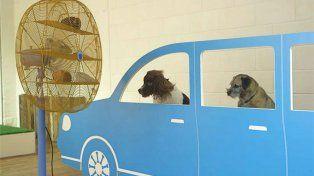 Se estrenó la primera muestra de arte para perros con pinturas e instalaciones interactivas