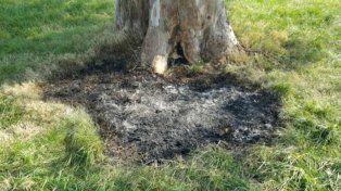 Junto a este árbol fue hallada la valija con el cuerpo incinerada de una mujer joven.