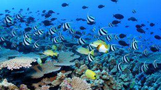 Tesoro natural. La región es el hogar de unas 7.000 especies.