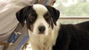 Pirata, el perro que se convirtió en un símbolo de fidelidad en el Nuevo Hospital de Río Cuarto.