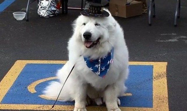 Un perro va por su tercer mandato como intendente de un pueblo tras ganar las elecciones