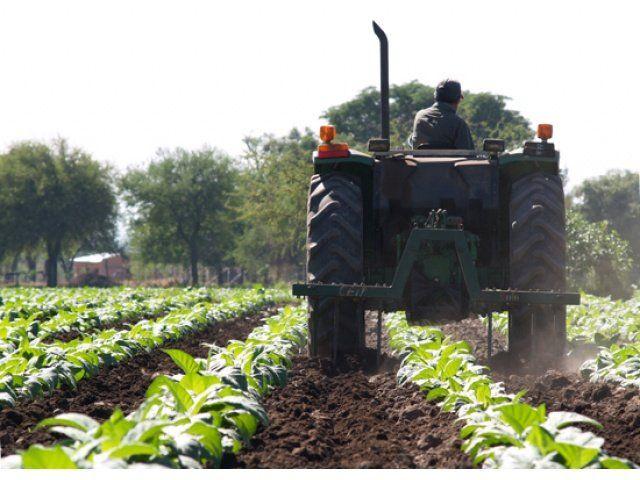 en el piso. La producción del tabaco cayó un 19% en julio respecto de igual mes del año anterior.