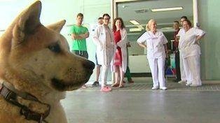 Maya se mantiene firme en la puerta del hospital esperando por su dueña