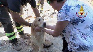 Un perro fue rescatado entre los escombros nueve días después del sismo que sacudió a Italia