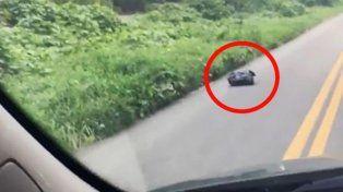 Vio una bolsa de basura que se movía en el medio de la ruta, frenó y salvó una vida