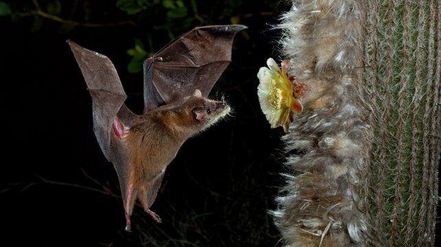 Mitos y verdades sobre los murciélagos.
