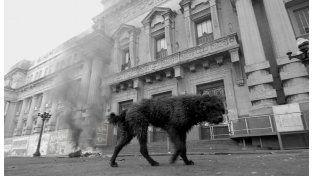 Perros de la calle